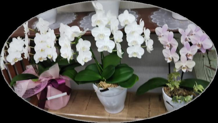 2018年秋のフラワー・お彼岸用のお花