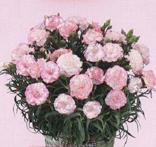 2019.5.12母の日ギフト Mother's Day